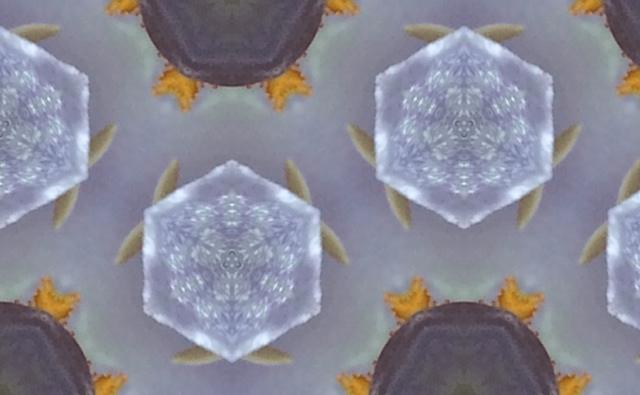 cellule maggio
